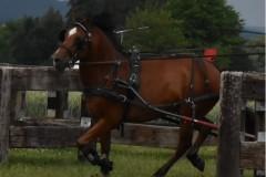 TrainingsTurnier-4